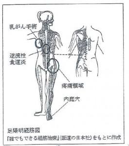 足陽明経筋図