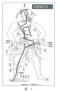 症状発現部位は足の厥陰肝経に沿っている